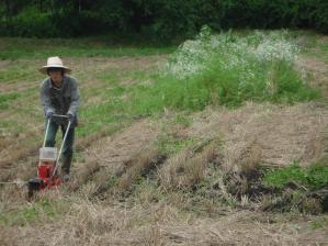 2010-7-16かえで農場大豆4