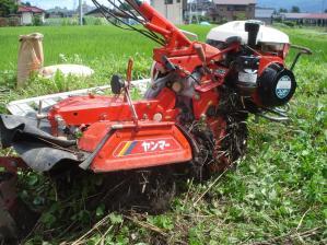 2010-7-16かえで農場大豆2