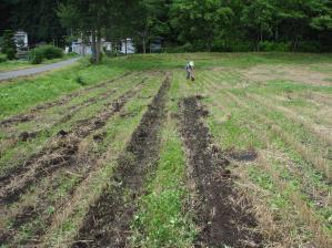 2010-7-16かえで農場大豆1