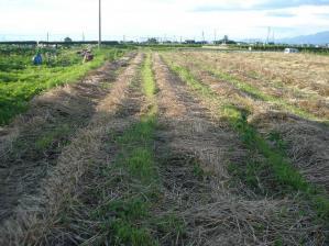 2010-7-17ライ麦3
