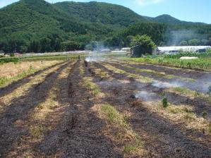 2010-7-19小麦の後処理1
