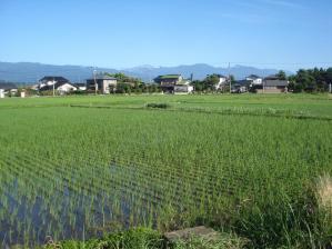 2010-7-18.田んぼjpg