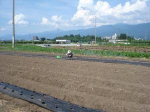2010-7-20秋野菜の種まき