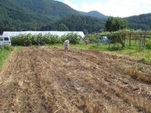 2010-7-20そばの種まき