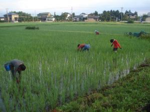 2010-7-25田んぼ1