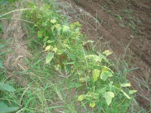 2010-8-24小豆