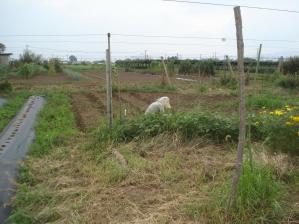 2010-8-25白菜