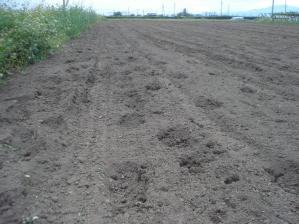 2010-9-26ライ麦