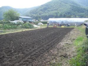 2010-9-29スペルト麦