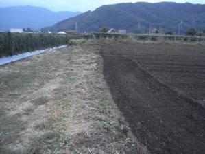 2010-9-29黒小麦