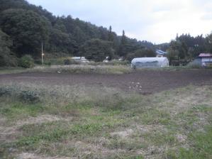 2010-10-2南部小麦1