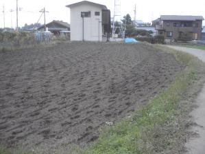 2010-10-2南部小麦
