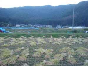 2010-10-12田んぼ