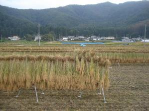 2010-10-13田んぼ