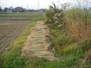 2010-10-18田んぼ9