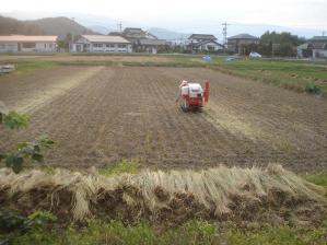 2010-10-18田んぼ7
