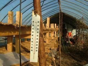 2010-12-10大根