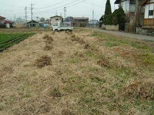 2010-12-13大豆