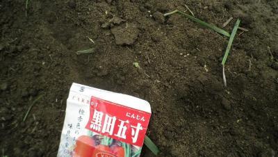 2011-4-26人参8