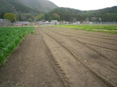 2011-5-3ひまわり1