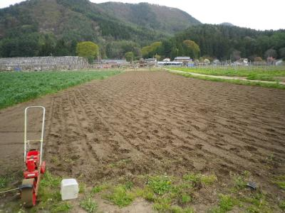 2011-5-4ひまわり1