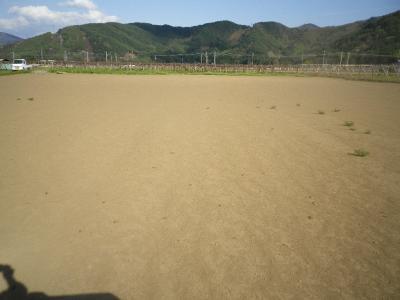 2011-5-5ひまわり
