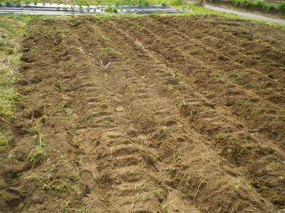 2011-5-9小豆2