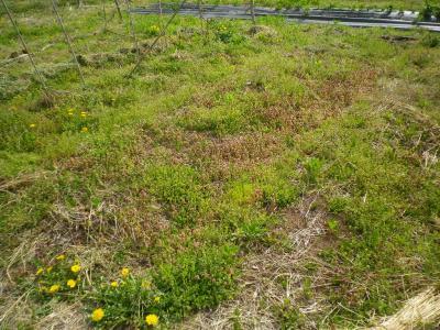 2011-5-9小豆