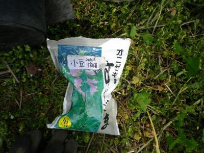 2011-5-9小豆1