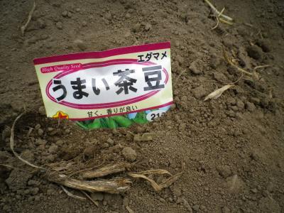 2011-5-9茶豆
