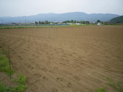 2011-5-16そば・大豆