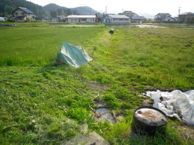 2011-5-17田んぼ