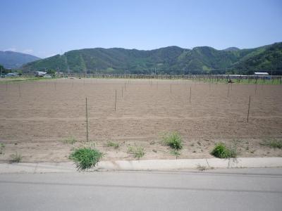 2011-5-18大豆1
