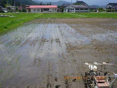 2011-6-14田んぼ田植え