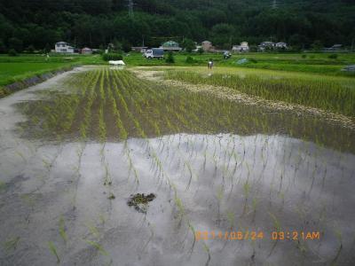 2011-6-24田んぼ