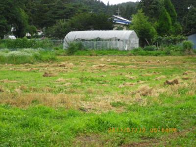 2011-7-12小麦