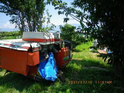 2011-7-14黒小麦4