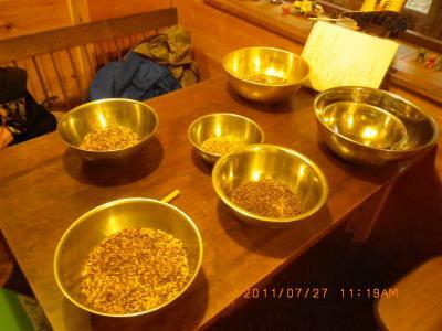 2011-7-27黒小麦