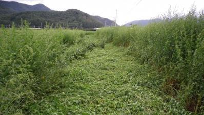 2011-9-1桔梗ヶ原農園4