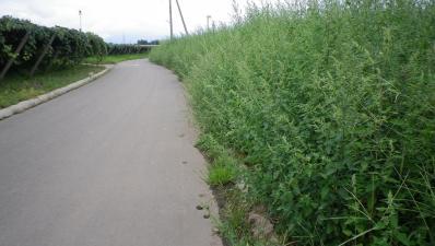 2011-9-1桔梗ヶ原農園