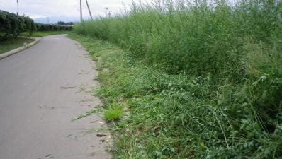 2011-9-1桔梗ヶ原農園1