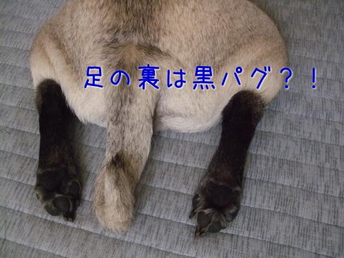 2009_07180098.jpg
