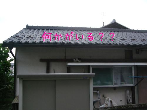 2009_07250048.jpg