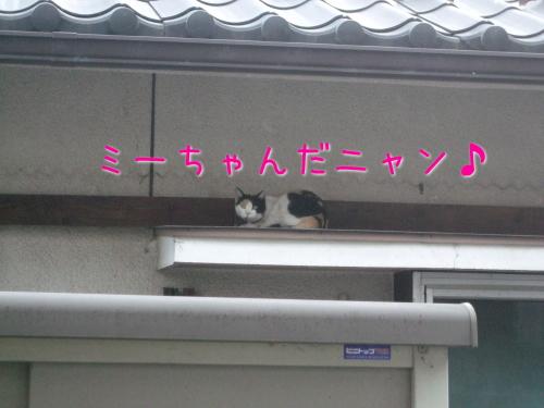 2009_07250049.jpg
