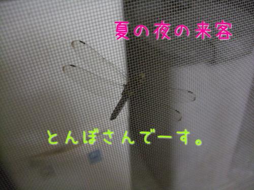 2009_08210001.jpg
