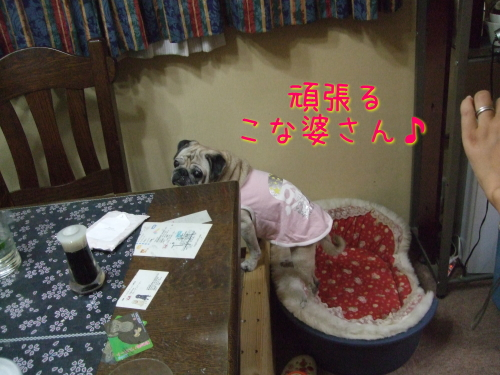 2009_09230057.jpg