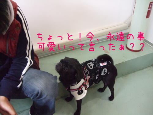 2009_11290106.jpg
