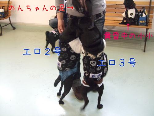 2009_11290118.jpg