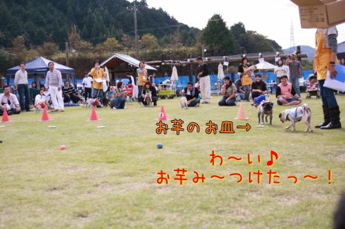 7_large.jpg