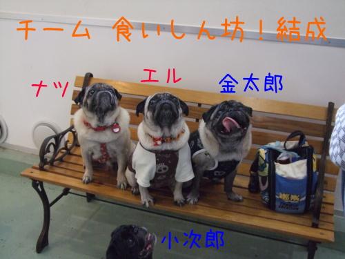 natsukintaelle.jpg